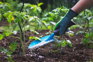 در نتیجه وقوع بارندگی کود شیمیایی نیتراته چون داری بار منفی است جذب ذرات خاک نمی شود و همراه آب به اعماق خاک می روند و از دسترس گیاه خارج می شوند.