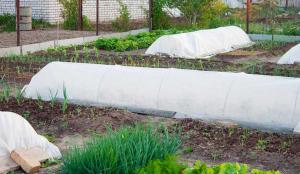 کود ارگانیک با محیط زیست سازگار است.
