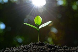کود هیومیک اسید باعث بهبود فیزیکی، شیمیایی و بیولوژیکی خاک می شود.
