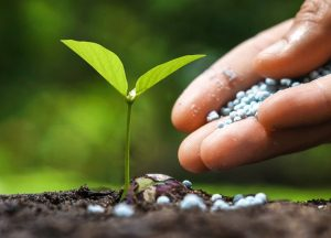 اصلاح خاک و استفاده از کود کشاورزی تضمین کننده حاصلخیزی خاک