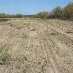 اصلاح خاک و استفاده از کود کشاورزی در مورد خاک های شور