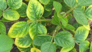 جذب پتاسیم در گیاه