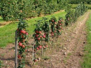 علت میوه ندادن درخت