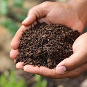 پیش از اقدام به تنظیم PH خاک چه اطلاعاتی را باید بدانید؟