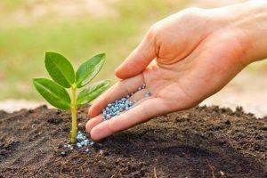 چگونگی انجام اصلاح خاک و استفاده از کود کشاورزی
