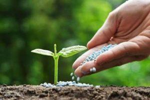 کوددهی مناسب یک علت میوه ندادن درخت است