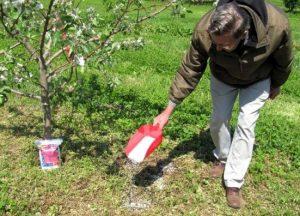 کوددهی نامناسب علت  میوه ندادن درخت میوه