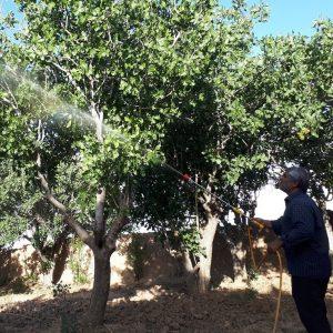 استفاده از صابون محلول پاشی در مناطق غبارآلود امری ضروری است