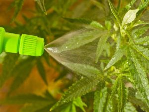 صابون محلول پاشی چیست و چه کاربردی دارد؟