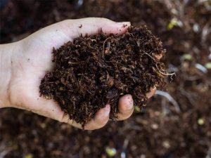 کود ارگانیک و کود های دامی مانند کود گاوی می توان مواد آلی خاک را افزایش داد.